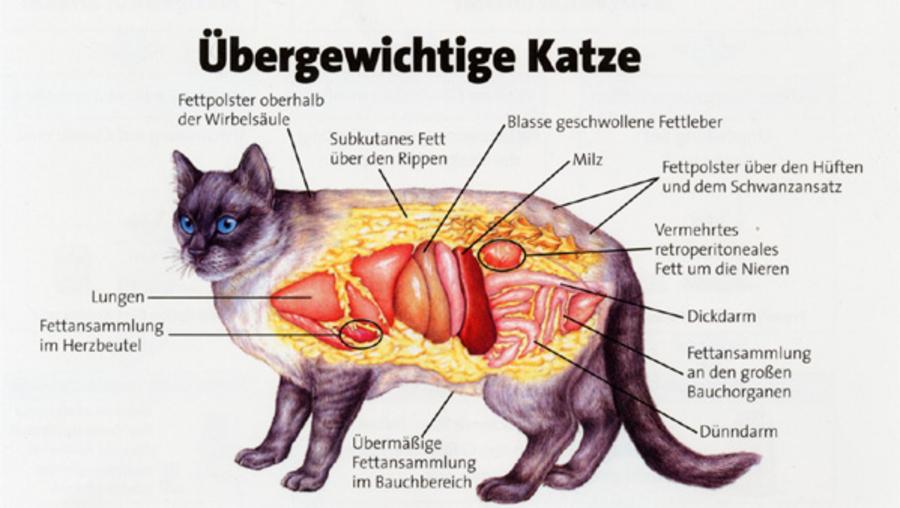 Katze | Tierarztpraxis Dr. Mertens und Küppers