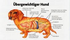 Übergewichtiger Hund